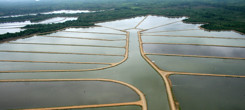Tropical Aquaculture Products